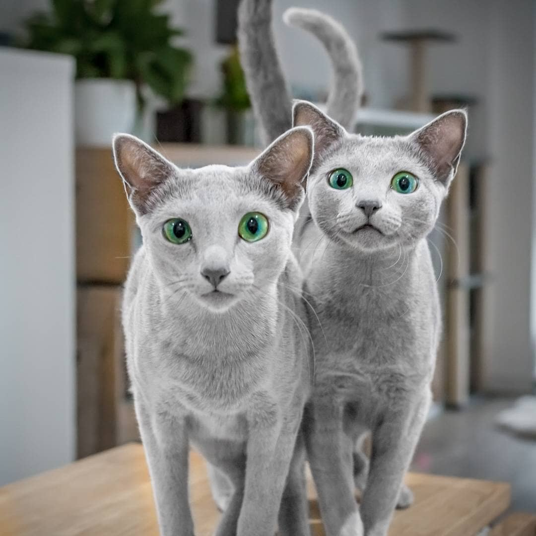pet store, cats, kittens