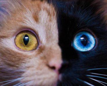 pet cat pet store
