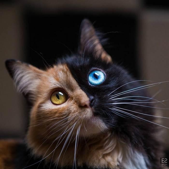 cat dog feline pet adoption pet finder pet insurance pet sematary pet store puppy