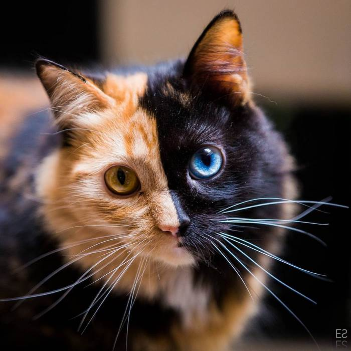pets cats