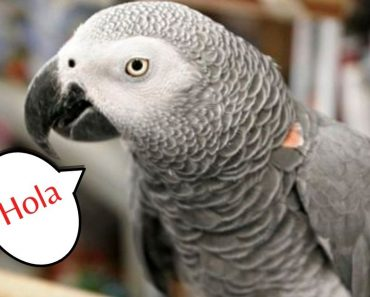 After 4 Years, Parrot Returns To California Home Speaking Fluent Spanish
